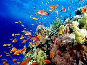 Great Barrier Reef Facts Cairns Australia | Distant Journeys | Australian and New Zealand Guided Tours Holidays