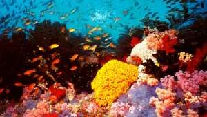 australia-the-great-barrier-reef | Tours of Australia