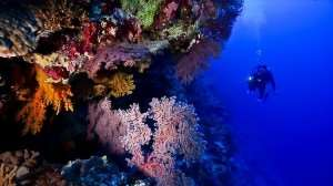 Great Barrier Reef diving snorkelling underwater deep sea adventure fish wildlife marine life coral best waterfront seaside sea water side locations destinations to visit travel Distant Journeys holidays to Australia guided escorted coach tours flights accommodation Sydney Melbourne Adelaide Cairns Alice Springs Ayers Rock New Zealand Milford Sound Christchurch Auckland Wellington Rotorua