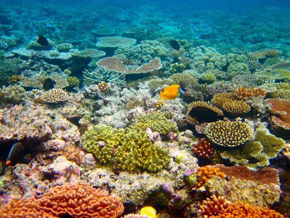 Great Barrier Reefs Corals