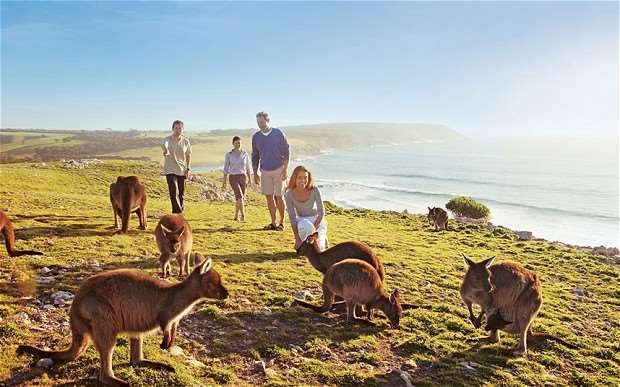 Kangaroo Island kangaroo roaming freely wandering marsupials mammals animals wildlife South Australia near Adelaide see spot visit meet Distant Journeys escorted tours touring holidays trips to Australia flights accommodation Sydney Melbourne Cairns Great Barrier Reef Alice Springs Ayers Rock