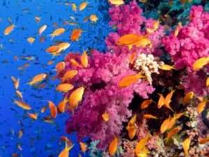 Great Barrier Reef diving snorkelling fish sealife water underwater sea ocean what to pack take guide hints tips help Distant Journeys touring holidays escorted guided tours breaks flights accommodation travel provider Australia Adelaide Melbourne Sydney Cairns Alice Springs Great Barrier Reef New Zealand Milford Sound Rotorua Auckland Wellington Christchurch