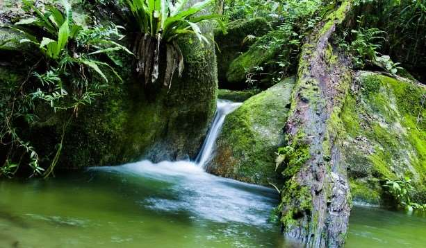 Waterfall in the Daintree Rainforest with Cairns Rainforest Tours Australia with Distant Journeys