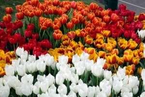 Melbourne International Flower & Garden Show events Melbourne escorted tours Distant Journeys