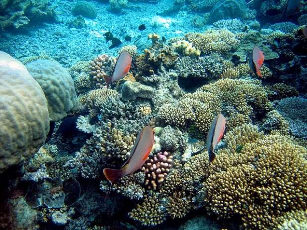 Great Barrier Reef natural beauty things to do in Australia Distant Journeys