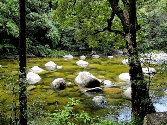 Daintree Rainforest natural beauty things to do in Australia Distant Journeys