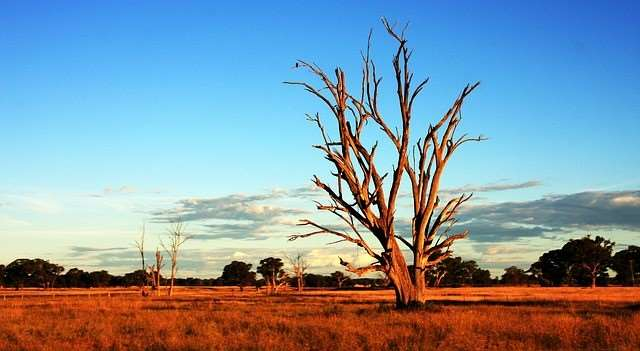 Travel to Australia and experience the unique Australian outback