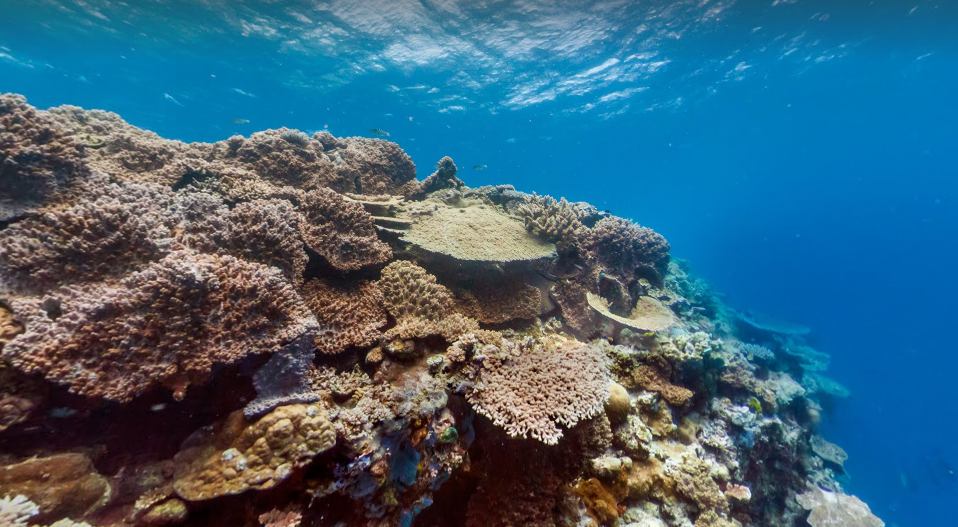 Explore the Great Barrier Reef on Australia holidays