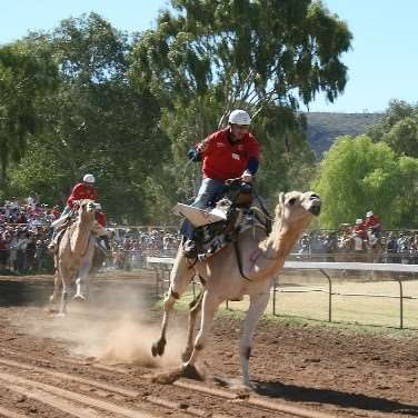 See the Alice Springs Camel Cup race on our escorted Australia tours