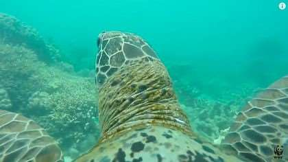 Turtle's view of the Great Barrier Reef – visit on our Australia tour holidays