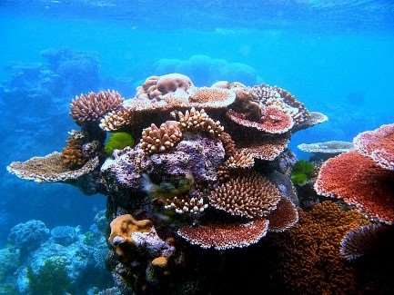 See these colourful corals on our Distant Journeys Great Barrier Reef tours