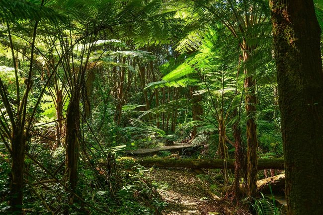 rainforest green fern trees australia