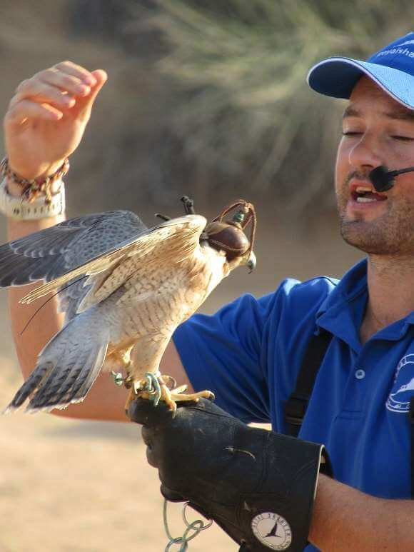 falconry display dubai