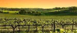 ADL Barossa Valley Vineyards