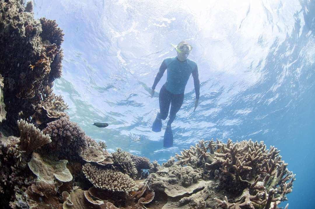 Cairns snorkeller