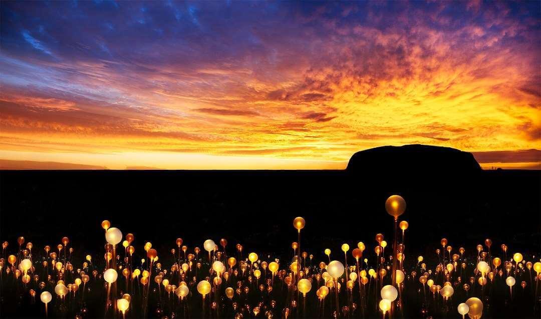 Field of Light Sunset