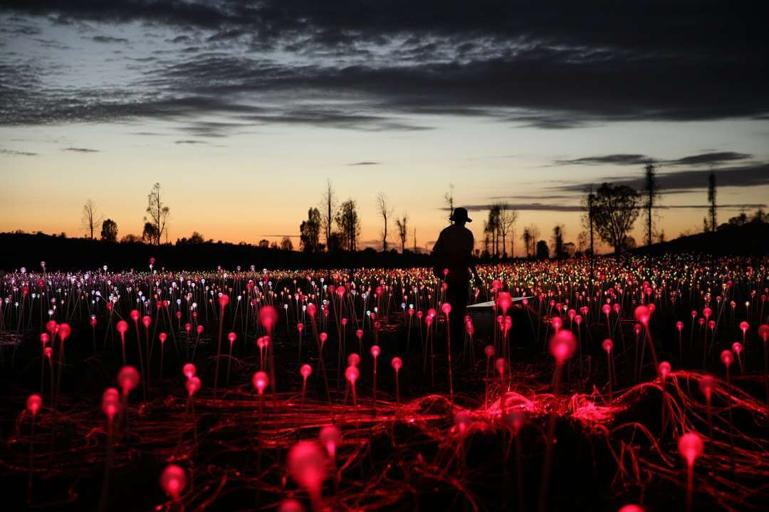AYQ Field of Light Purple Stems