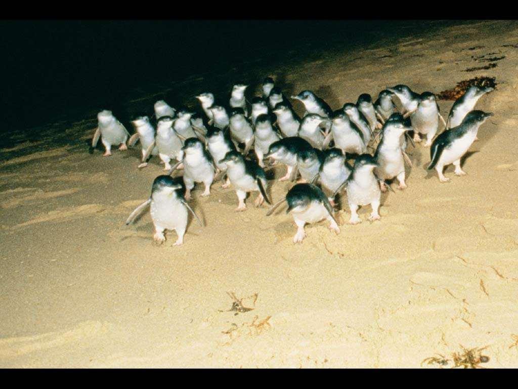 Phillip Island & Penguin Parade 2