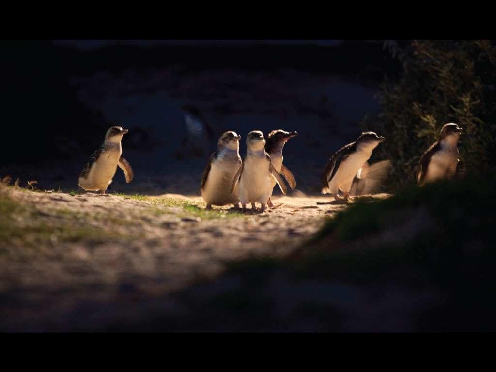 Phillip Island & Penguin Parade 3