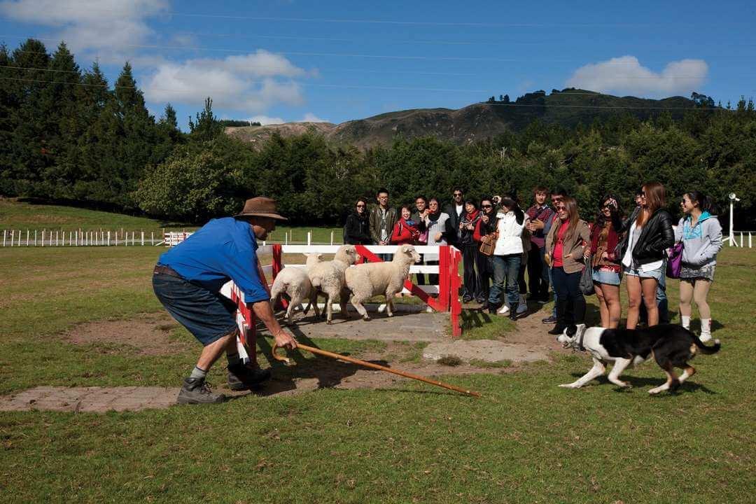 Rotorua Agrodome tour Farm