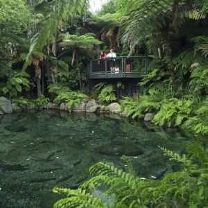 Rotorua Agrodome Rainbow Springs