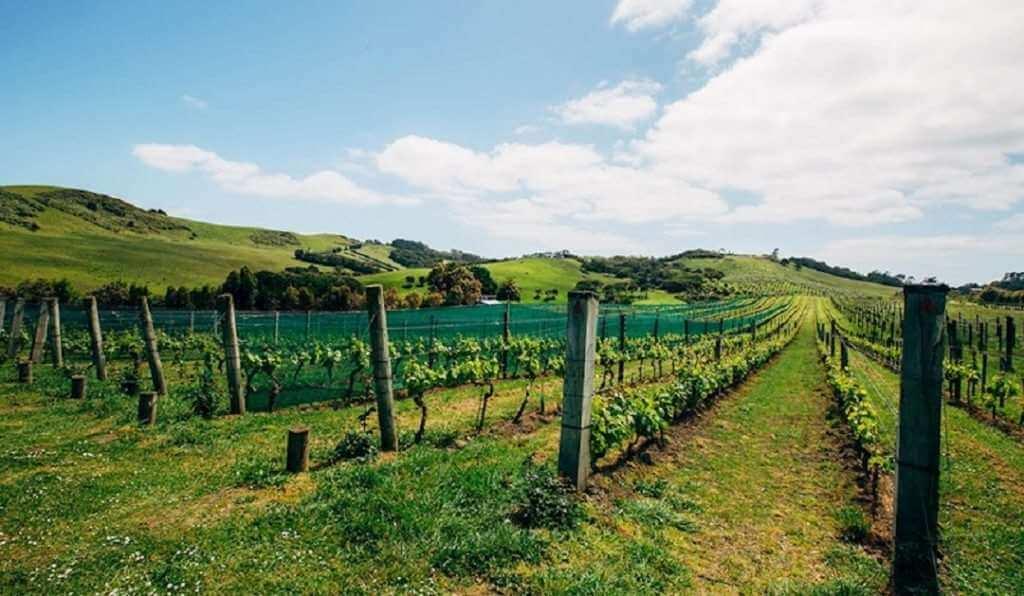 Waiheke wine tour