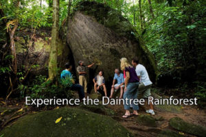 daintree-national-park-tour