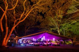 rainforest-dinner-in-port-douglas-cairns