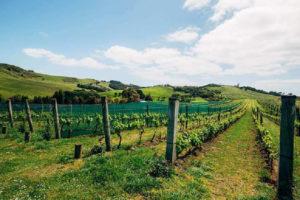 waiheke-island-wine-tour-auckland