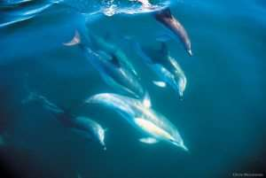 wild dolphins in new zealand