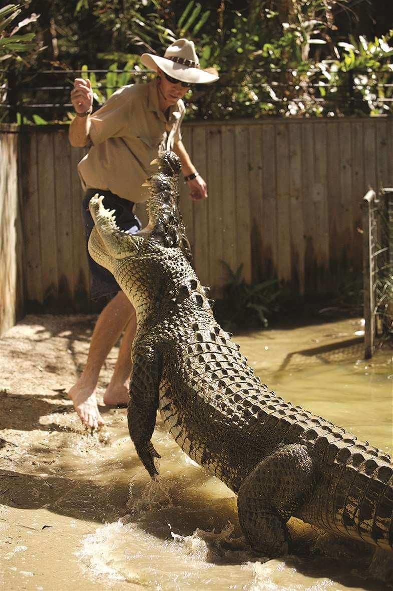 HCA  Croc attack