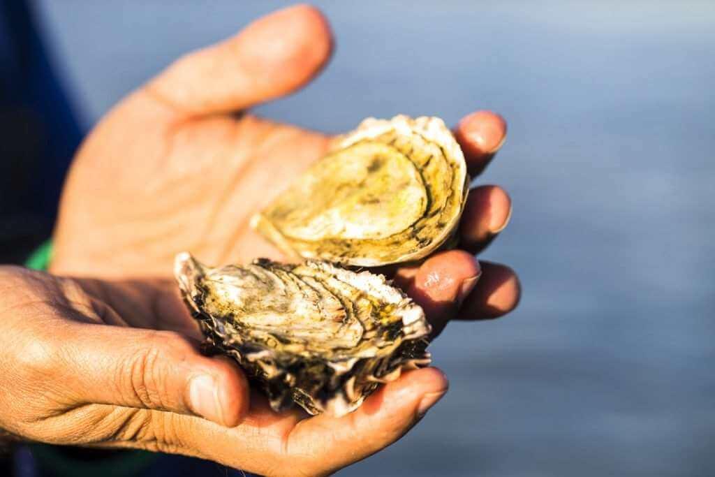 oyster new zealand sea food