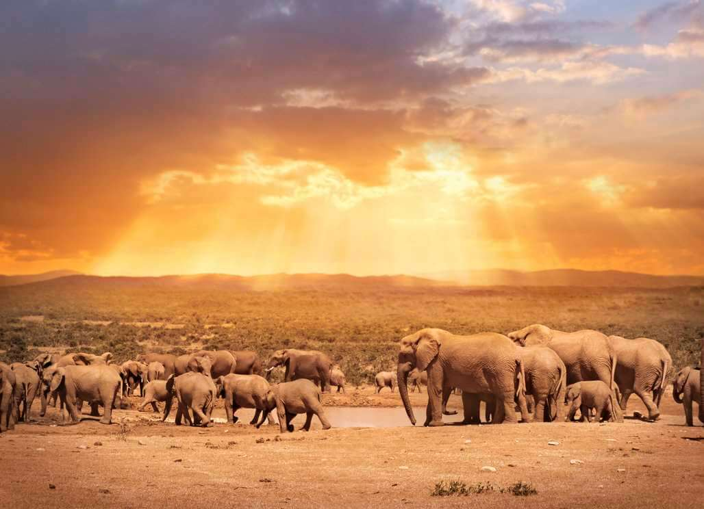 south africa�s amazing wildlife conservation projects