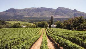 Winelands/Vineyards