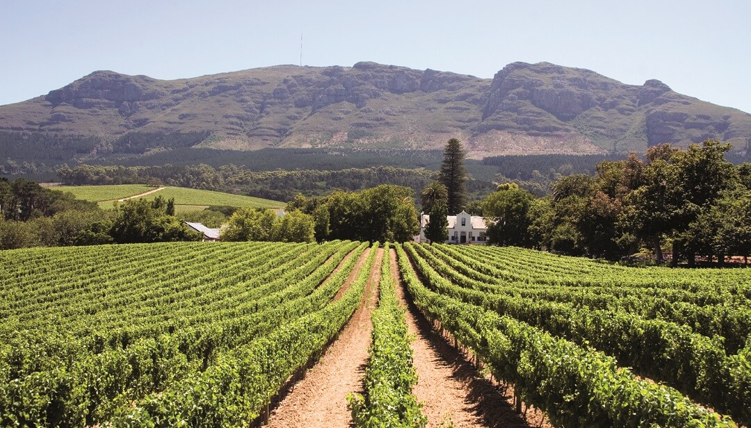 Winelands 1