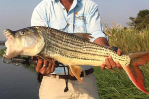 south-africa-zambezi-fishing-tight-fish