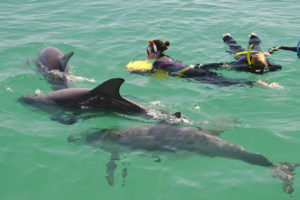 swimming-with-dolphins-perth-australia