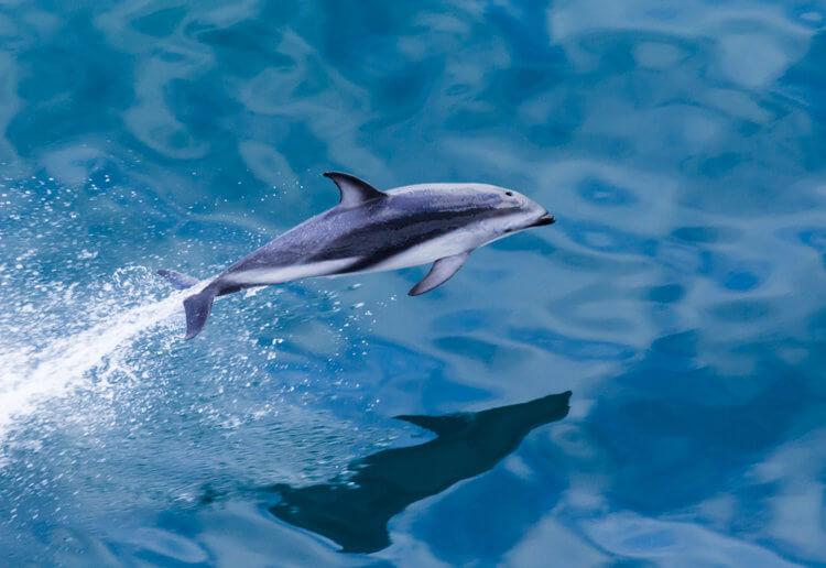 dolphin new zealand