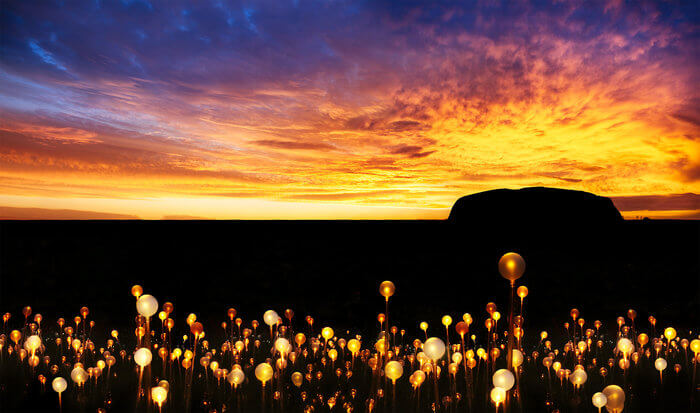 field of light uluru australia