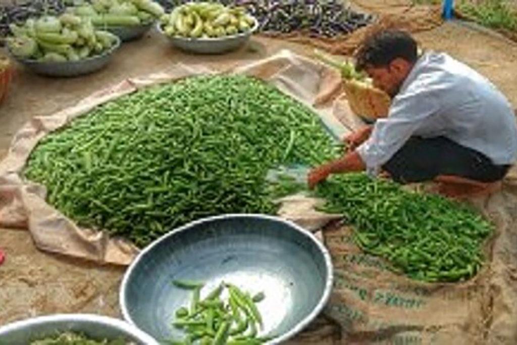 Organic-farm-Jaipur