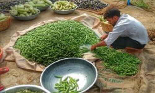 Organic farm Jaipur