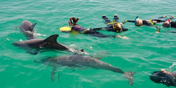 swimming with dolphins in australia