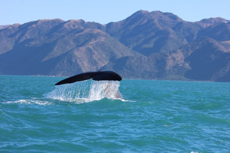 whale spotting in new zealand