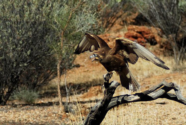 Alice Springs Desert Park Australia