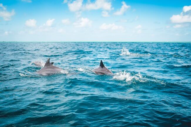 dolphins swimming in ocean blue skies