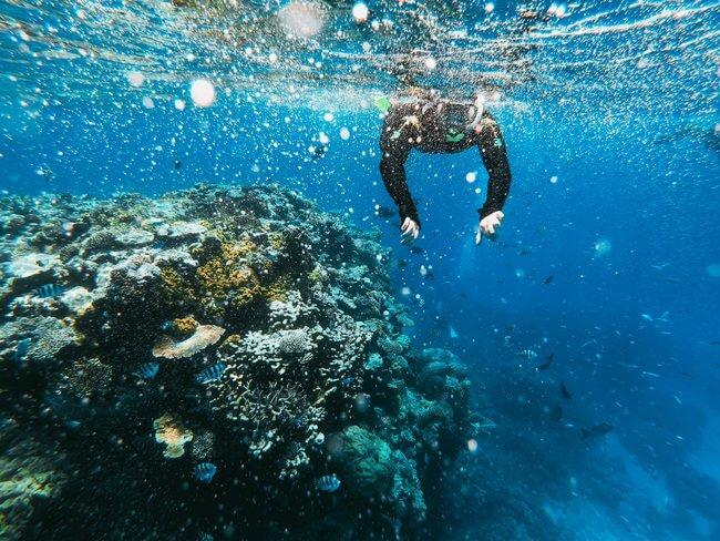 scuba diver underwater great barrier reef