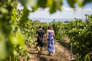 around-the-bay-in-a-day-walking-winery