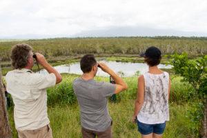 eubenangee-swamp-cairns