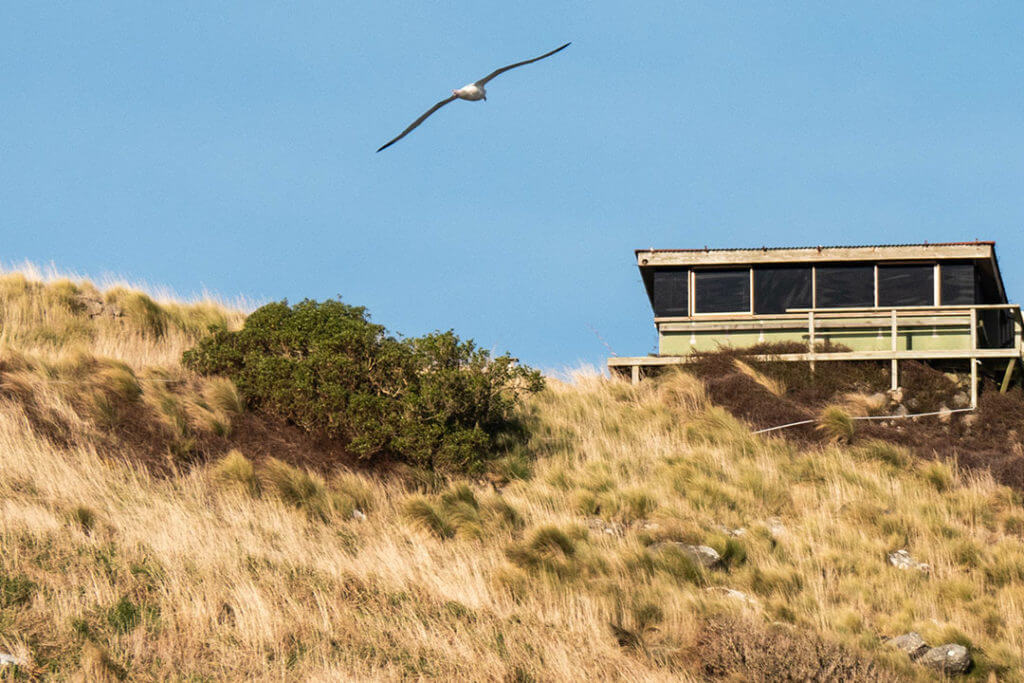 royal-albatross-centre-dunedin