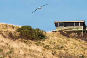 royal-albatross-centre-dunedin